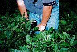 Agrispon organic fertilizer trials in Illinois, America, in 2000.